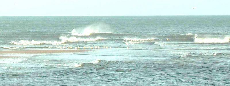 mar-do-norte-e-gaivotas-low